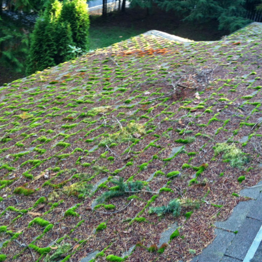 Roof Moss Removal, Roof Moss Treatment, Moss Removal, Moss Treatment, Home  Moss